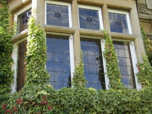 Residential window cleaning - windows